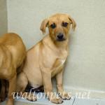 Adoptable Georgia Dogs for April 24, 2015