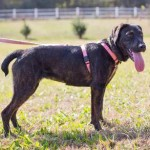 Adoptable Georgia Dogs for April 13, 2015
