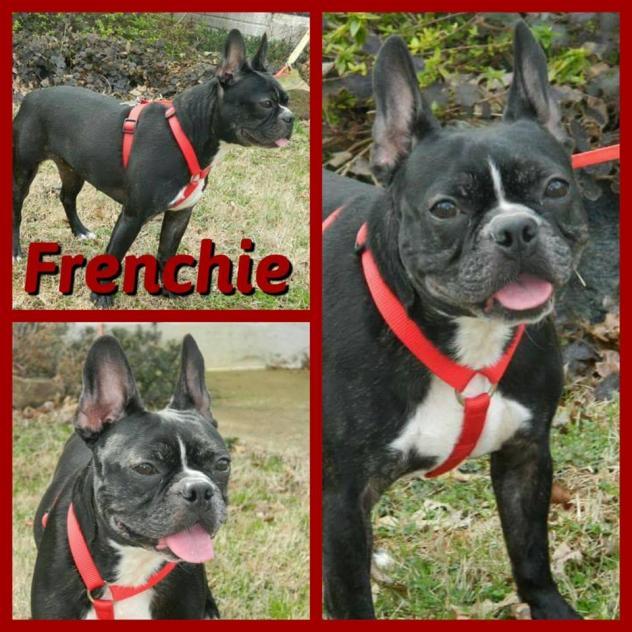 Frenchie2