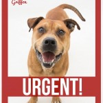 Adoptable Georgia Dogs for April 1, 2015