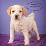 Adoptable Georgia Dogs for April 9, 2015