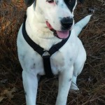 Adoptable Georgia Dogs for April 20, 2015