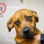 Adoptable Georgia Dogs for April 4, 2015