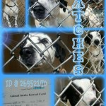Adoptable Georgia Dogs for April 29, 2015