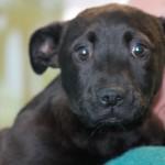 Adoptable Georgia Dogs for April 10, 2015
