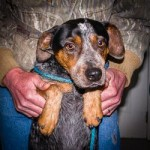 Adoptable Georgia Dogs for April 27, 2015