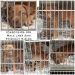 Adoptable Georgia Dogs for May 15, 2015
