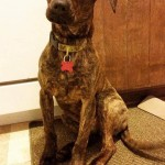 Adoptable Georgia Dogs for May 14, 2015