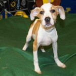 Adoptable Georgia Dogs for May 22, 2015