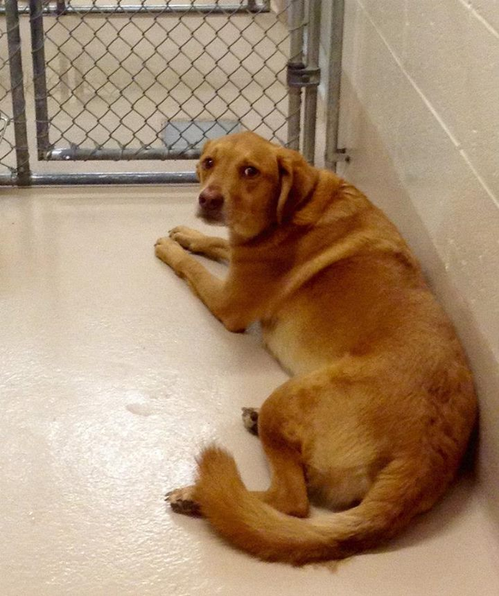 Golden retriever mix puppies orange county