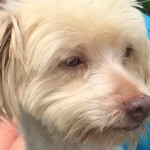 Adoptable Georgia Dogs for June 16, 2015
