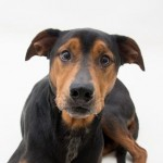 Adoptable Georgia Dogs for June 4, 2015