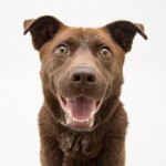 Adoptable Georgia Dogs for June 26, 2015