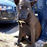 Adoptable Georgia Dogs for June 1, 2015