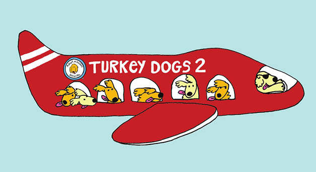 Turkey Dogs 2 Adopt Golden Atlanta