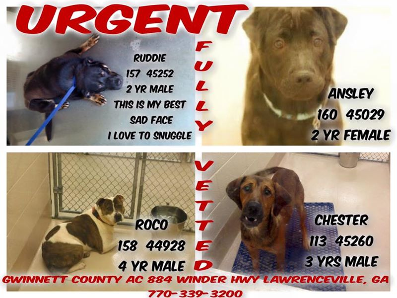 Urgent Dogs Gwinnett