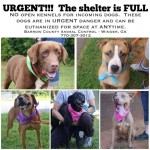 Adoptable Georgia Dogs for July 10, 2015