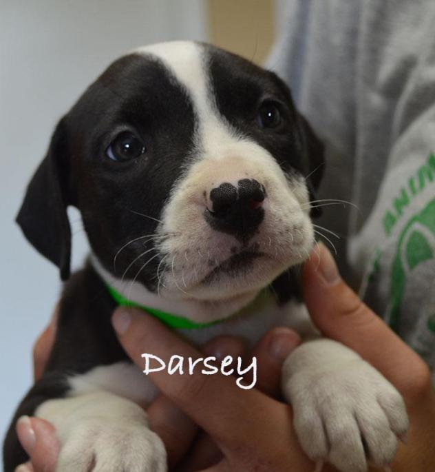 Darsey
