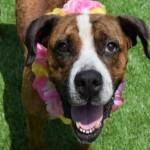 Adoptable Georgia Dogs for July 9, 2015