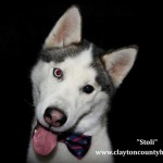 Adoptable Georgia Dogs for July 7, 2015