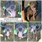 Adoptable Georgia Dogs for August 14, 2015
