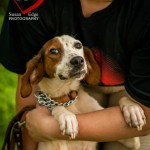 Adoptable Georgia Dogs for August 28, 2015