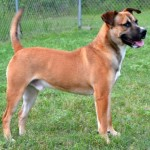 Adoptable Georgia Dogs for August 3, 2015