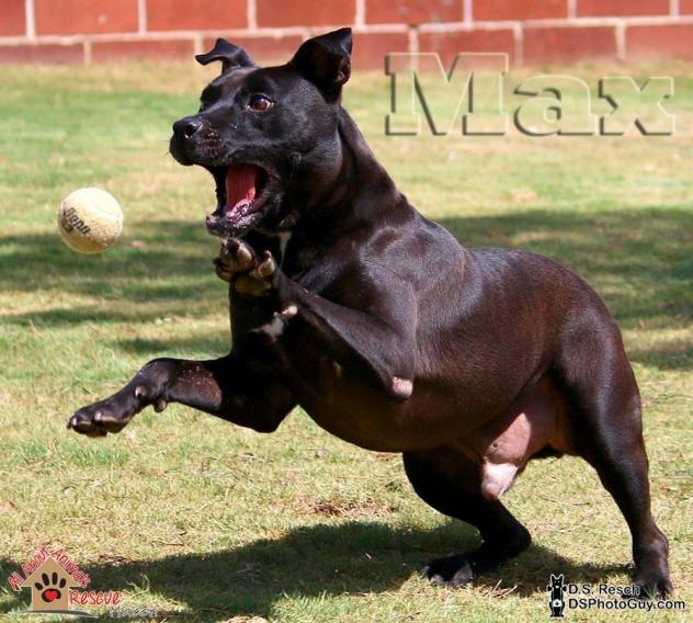Max Tennis Ball1