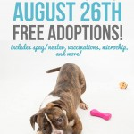 Adoptable Georgia Dogs for August 26, 2015