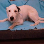 Adoptable Georgia Dogs for August 21, 2015