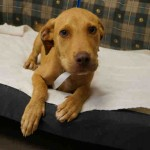 Adoptable Georgia Dogs for August 18, 2015