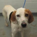 Adoptable Georgia Dogs for September 23, 2015