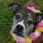 Adoptable Georgia Dogs for September 2, 2015