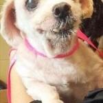 Adoptable Georgia Dogs for September 30, 2015