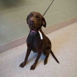 Adoptable Georgia Dogs for September 29, 2015