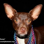 Adoptable Georgia Dogs for August 31, 2015
