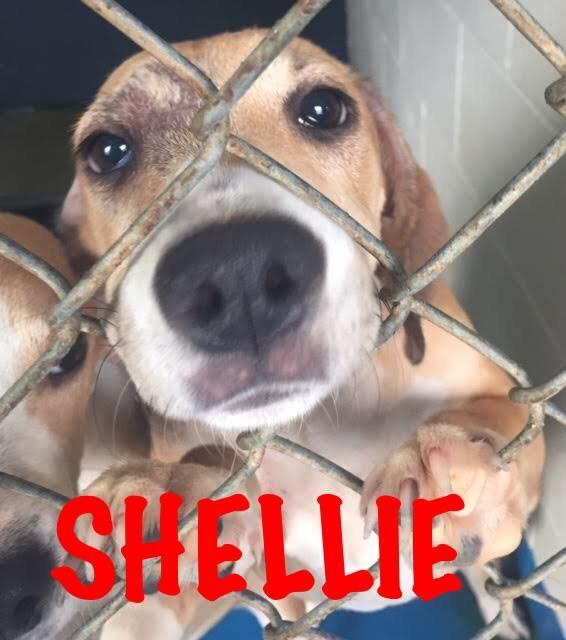 Shellie