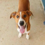 Adoptable Georgia Dogs for September 14, 2015