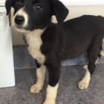 Adoptable Georgia Dogs for October 22, 2015