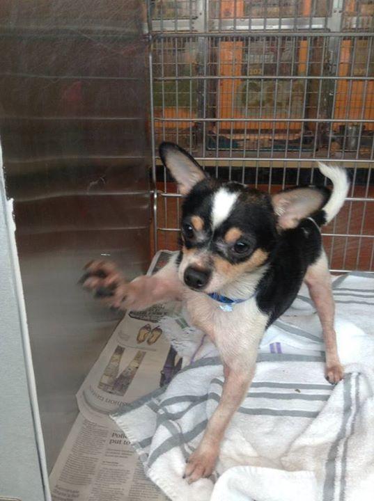 47266 Chihuahua