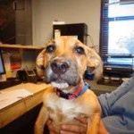 Adoptable Georgia Dogs for October 23, 2015