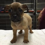 Adoptable Georgia Dogs for September 24, 2015