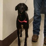 Adoptable Georgia Dogs for October 16, 2015