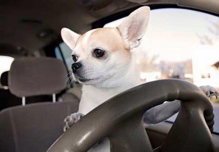 Rescue Driver