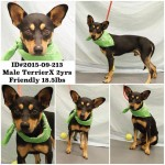 Adoptable Georgia Dogs for October 7, 2015