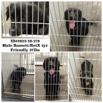 Adoptable Georgia Dogs for November 2, 2015