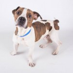 Adoptable Georgia Dogs for November 13, 2015