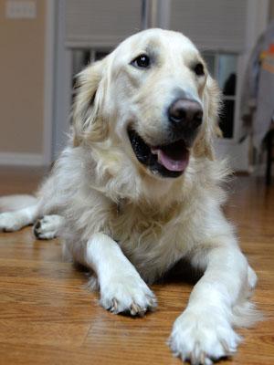Adoptable Georgia Dogs for December 8, 2015 - Georgia ...