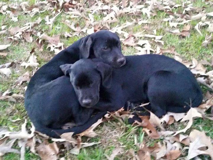 Byron Pups