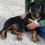 Adoptable Georgia Dogs for December 4, 2015